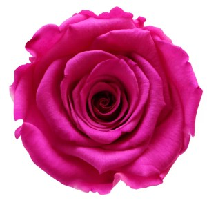Neon roses buy online