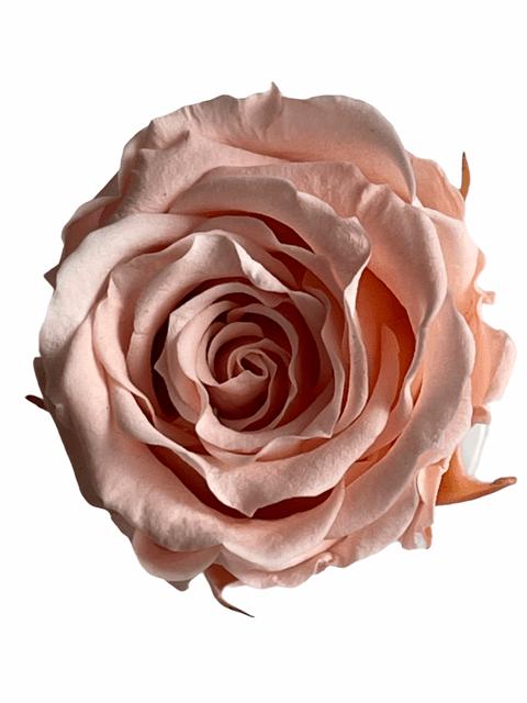 Best roses 2021
