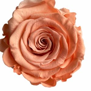 Infinity roses