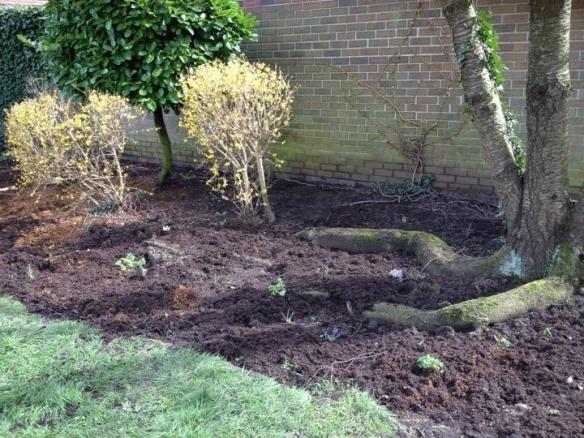 Planting Day 1