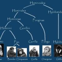 What Is The Scientific Name For A Gorilla - Gorilla Scientific Name