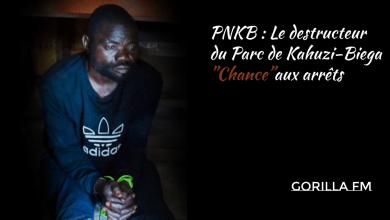 Photo of PNKB : Le destructeur du Parc de Kahuzi-Biega»Chance»aux arrêts