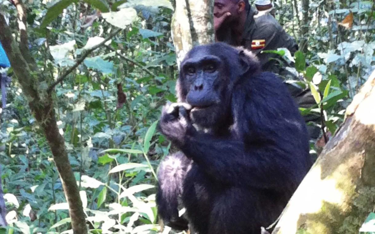 Uganda Primates Tour Safari