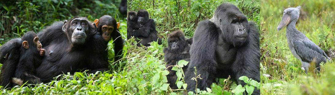 nationalparks-uganda
