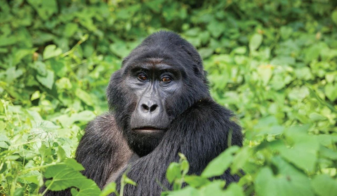 4 Days Uganda Rwanda Gorilla Trekking Safari
