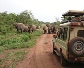11 days gorilla safari in Rwanda & wildlife tour Uganda