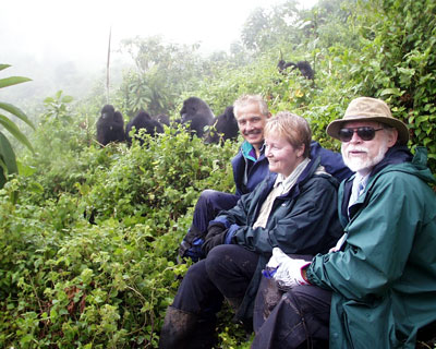 Gorilla safaris can be organized from Kilimanjaro airport