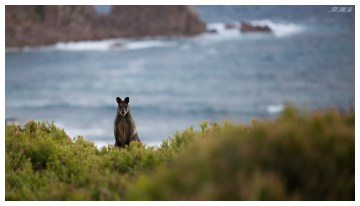 Phillip Island resident