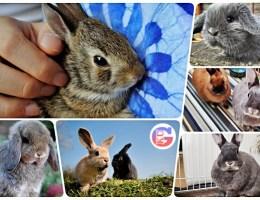 Особенности выбора клетки для декоративного кролика