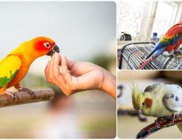 Чем правильно кормить попугая в домашних условиях