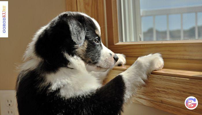 5 признаков того, что собака по Вам скучает