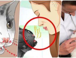 Появление запаха из пасти у кошки: причины и способы устранения