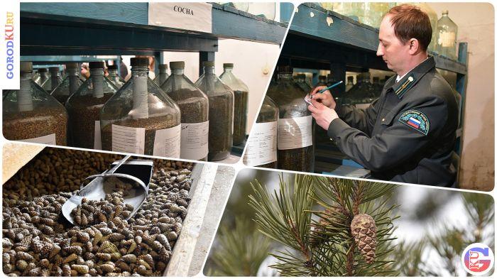 Лесовосстановление в Свердловской области  в 2021 году идет по плану