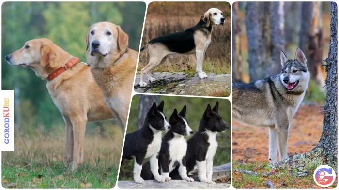 48-ая Каменск-Уральская городская выставка собак охотничьих пород