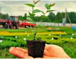 Сельскохозяйственная выставка-продажа пройдет перед Центральным рынком 22 мая
