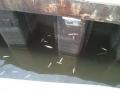 Дохлица рыбы на Селигере.