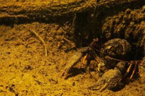 Обитатели подводного мира