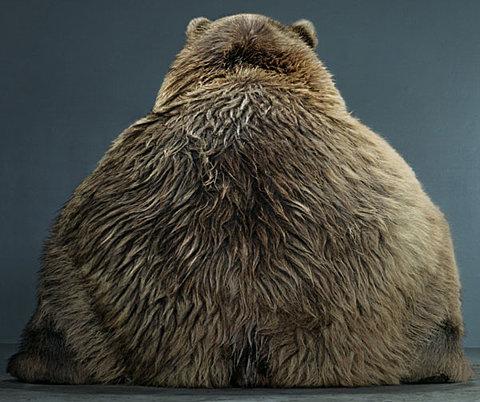 un oso visto por detrás