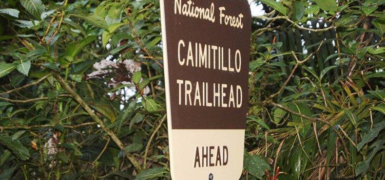 Caimitillo Trail – El Yunque