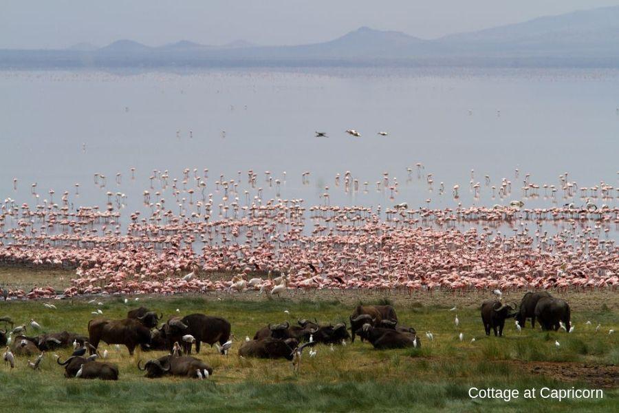 Flamingos in Lake Manyara