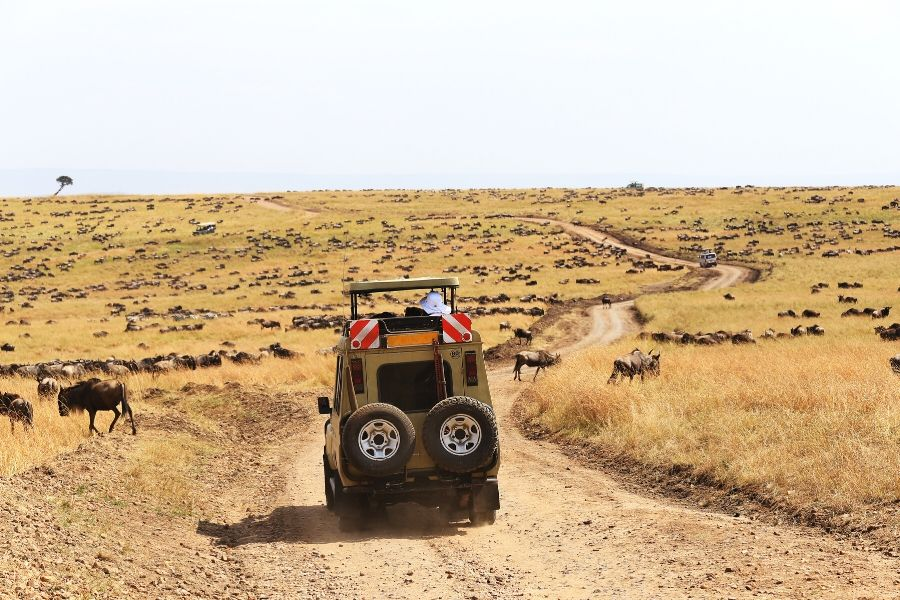 A game vehicle during a safari in Serengeti