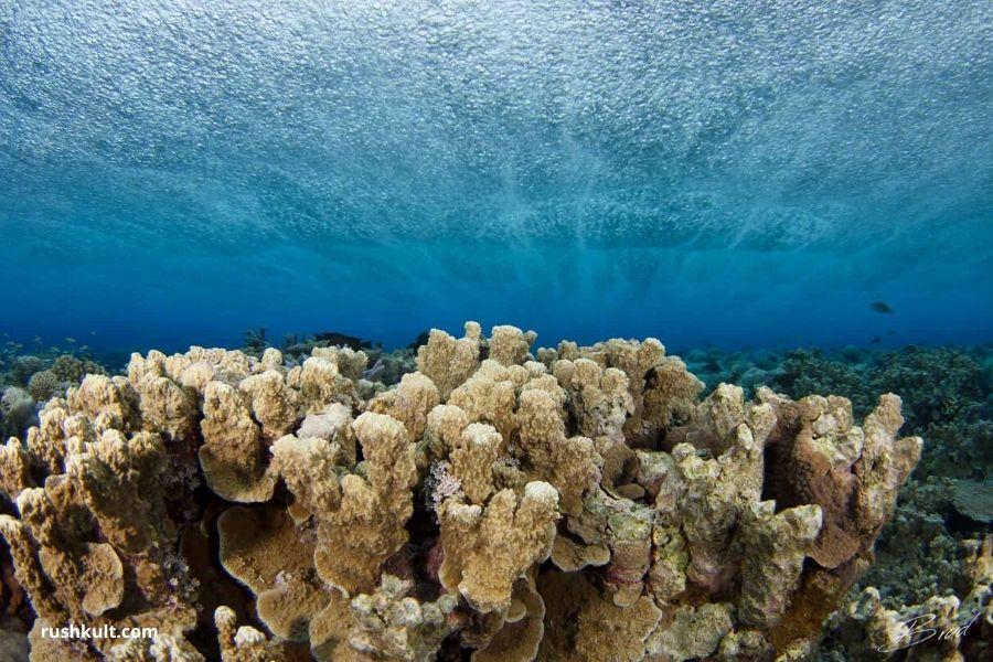 Reef In Wattabomi. Guide to Diving in Zanzibar Where To Go. Gosheni Safaris