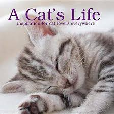 A Cat's Life-Parragon book