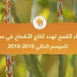 أصداء القمح تهدد انتاج الأقماح في سورية للموسم الحالي 2018-2019