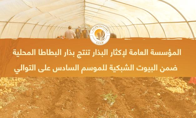 المؤسسة العامة لإكثار البذار تنتج بذار البطاطا المحلية ضمن البيوت الشبكية للموسم السادس على التوالي في حلب وادلب