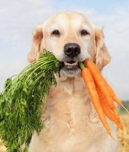 Labrador-veggies