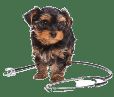 puppy stethoscope