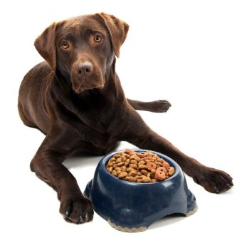 dog-food-rescource-guarding