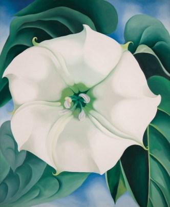 okeeffe-jimson-weed-white-flower