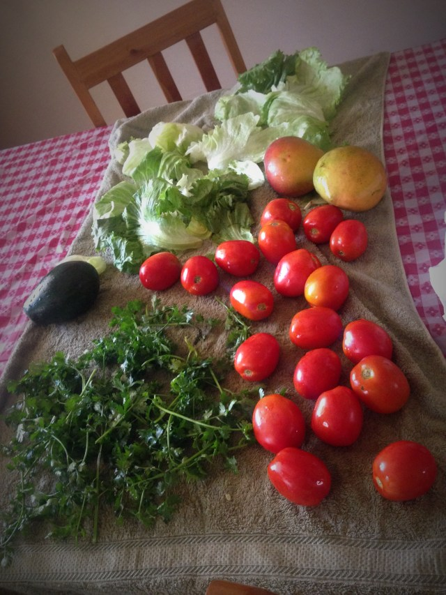 01.15-Fresh fruits and veggies to cook with. Such a huge gift!
