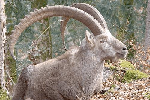 capricorn-february-horoscope