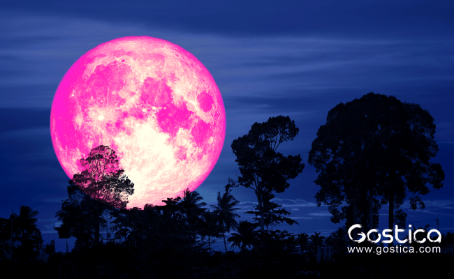 The Pink Moon 2019 And Its Emotional Meaning Gostica