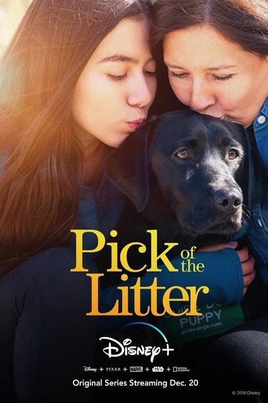 pick of the litter, disney plus