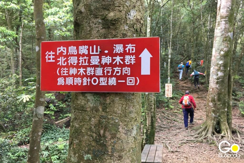北得拉曼巨木群步道(順時針)