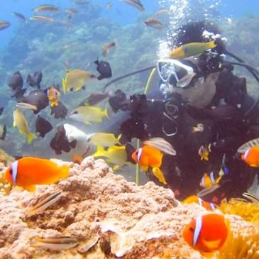 我與海底世界的相遇-水肺潛水