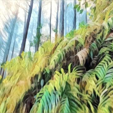 世界遺產-熊野古道,通往熊野本宮大社的初心者路線