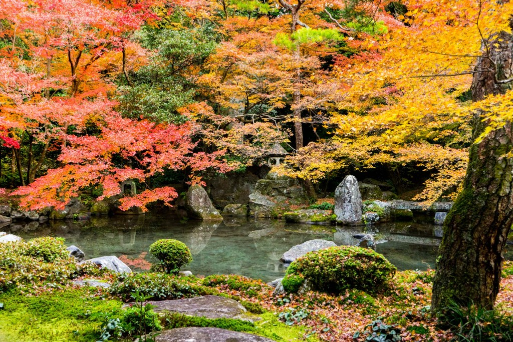 蓮華寺的庭院水池