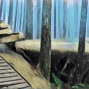 台灣小百岳-苗栗向天湖山,尋找沈睡山中的海狸