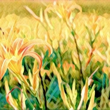 花蓮金針花季,赤科山與六十石山