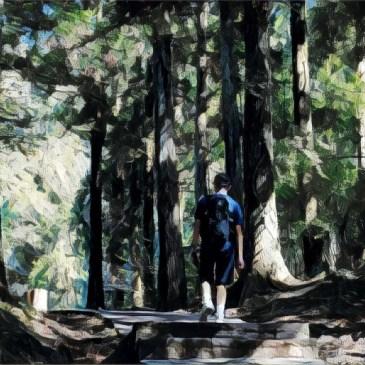 台灣小百岳|桃園東眼山,最有設計風格的森林步道