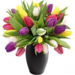Весняна посадка тюльпанів.