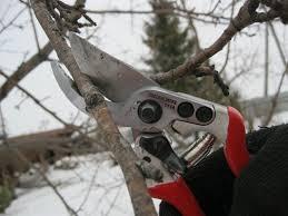 Обрізка дерев