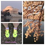 Cherry Blossom Run (Saucony Kinvara 4 Review)