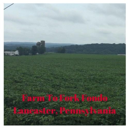 Farm To Fork Fondo Overview