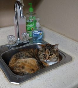 Cat in a sink at the vet