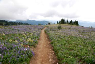 pct-meadow